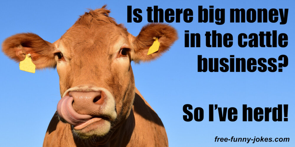 Cow One Liners